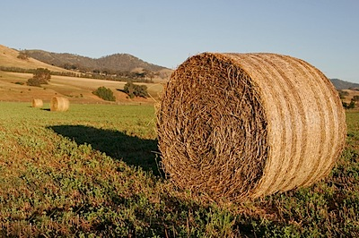Round_hay_bale_at_dawn02.jpg.jpeg